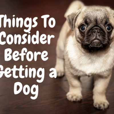 6 Things to consider Before Getting A Dog